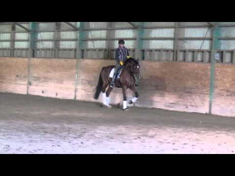 Airborn riden by Francine Bell, canter work, October 2011
