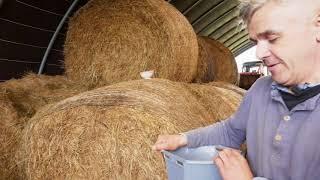 Centre-Bretagne : un 1er prix au Salon de l'agriculture pour les vaches Froment du Léon de Lanrivain