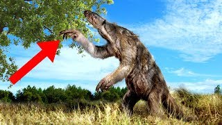 GIANT Extinct Versions Of Modern-Day Creatures!