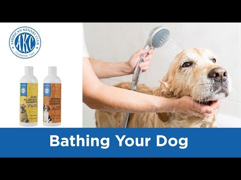 Bathing Your Dog - Vet Tips with Dr. Klein