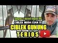 Ciblek Gunung Muda  Terios  Nagen Durasi Panjang Mr Made Cilacap  Mp3 - Mp4 Download