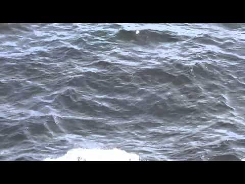 Antarctic Tour-Highlights