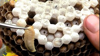 hornet-yellow-jacket-wasp-nest-removal-swarm