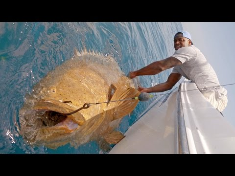 Monster Goliath Groupers with NFL Linebacker Sam Barrington - 4K