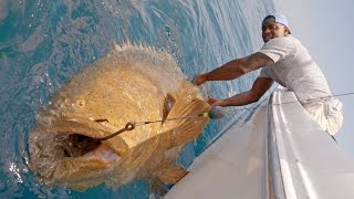 Monster Goliath Groupers with NFL Linebacker Sam Barrington - 4K thumbnail