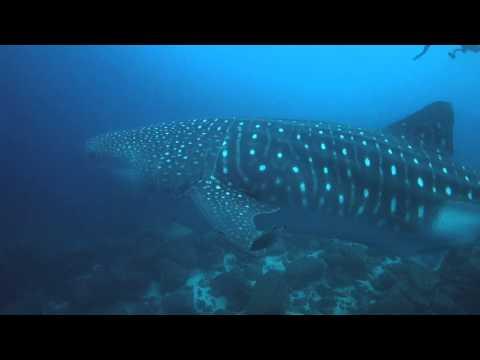 Galapagos Sky July 2014 Whaleshark Tracey