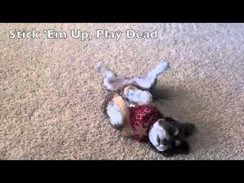 45 CUTE DOG TRICKS