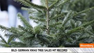 The Sad Reason Why Germans Buy More Christmas Trees