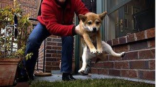 Приучение собаки  к туалету. Воспитание без насилия. Метод Пола Оуэнса.