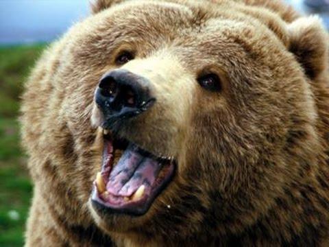 Erwachsene Bären Teeny mit langen