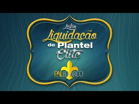 Lote 25 (HABILIDADE DA PAU D' ARCO - NON 2722)