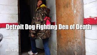 Detroit Dog Fighting Den Of Death *raw Video*