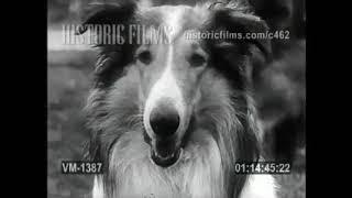 Смотреть видео 1970 Выставка собак СССР,Москва,ВДНХ) онлайн