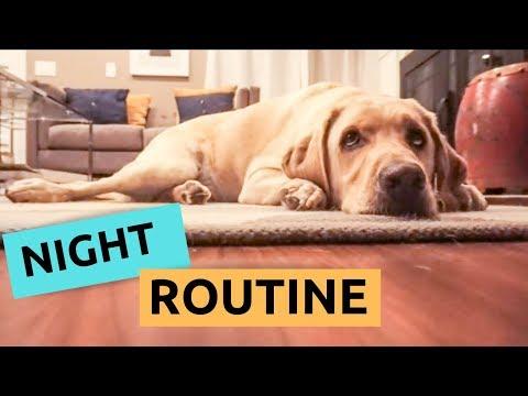 My Dog's Night Routine