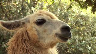 Ardèche - Ardèche Lamas