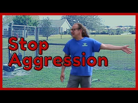 stop my dog from being aggressive | solid k9 training RI
