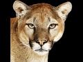 Installing OS X 10.8 Mountain Lion on VirtualBox