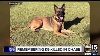 Как полицейские отдают честь погибшей собаке К9