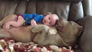 Cute Dog Baby sitting Dog Love Baby