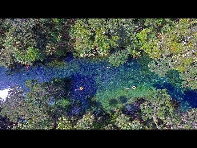 Florida Travel: Visit Blue Spring State Park