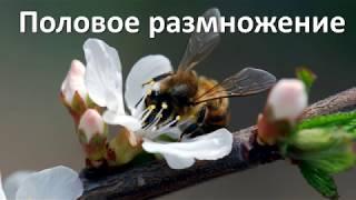 13. Половое размножение (6 класс) - биология, подготовка к ЕГЭ и ОГЭ 2019