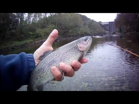 Flyfishing The White River, Arkansas - Beaver Dam Tailwater