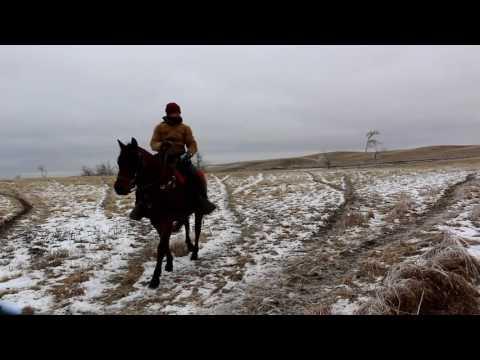 Cattle ranch  - Provost Alberta