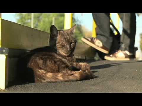 Graeme the cat gains rock star status on the Hurstbridge line   Adelaide Now