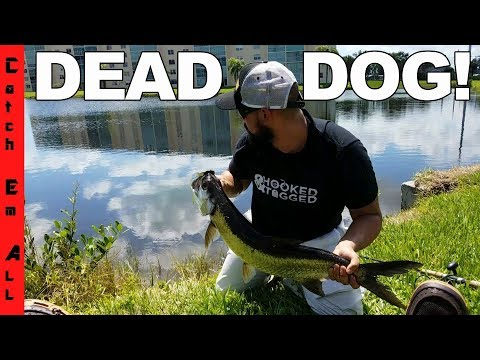 FOUND DEAD PET DOG while Fishing an ILLEGAL Saltwater Fish POND! Before getting kicked out