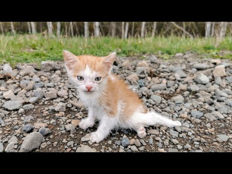 Котенок дополз до деревни чтобы просить о помощи История спасения Листика