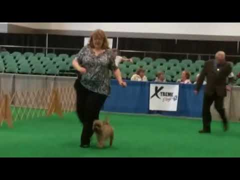 Canada Dog Show 10/21 and 10/22 2017
