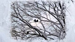 Снег и розы(, 2013-05-16T17:48:01.000Z)