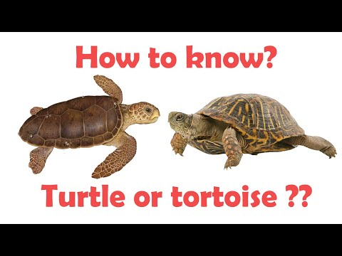Difference Between Turtle And Tortoise | Turtle Vs Tortoise | Simply E-learn Kids
