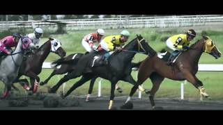 The beauty of horse racing