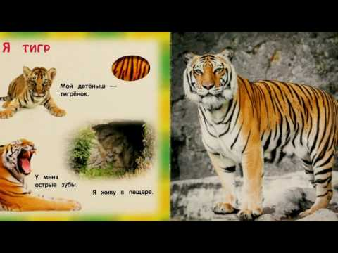 ДИКИЕ ЖИВОТНЫЕ загадки для детей читать с картинками