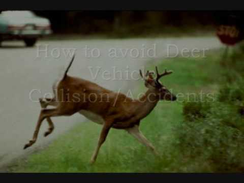 How To Avoid Deer Vehicle Collisions - Steps to take to keep safe