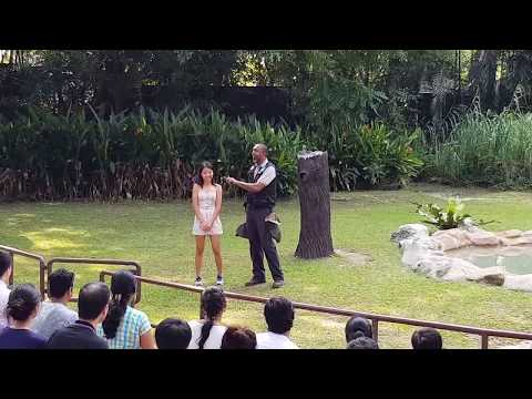 High Flyers Show - Jurong Bird Park, Singapore