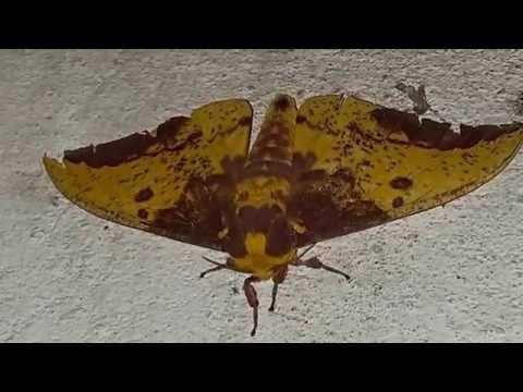 mariposas-y-polillas