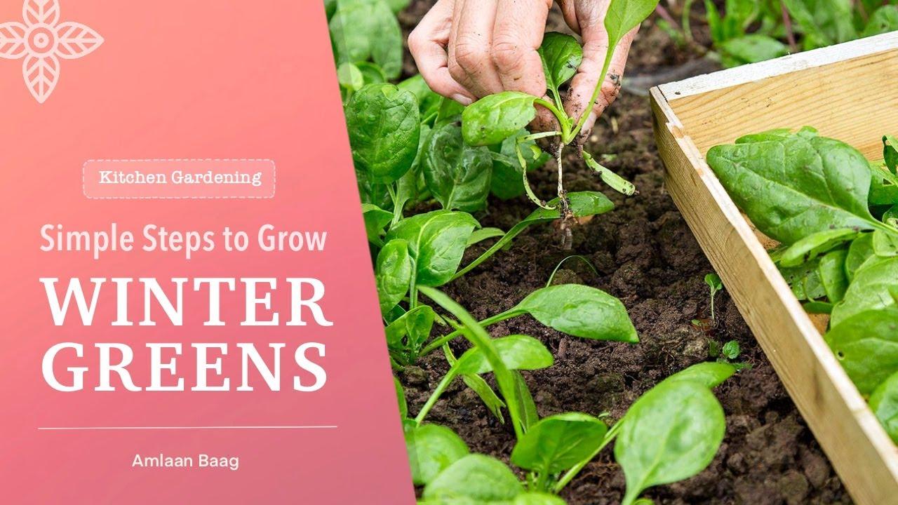 Kitchen Gardening | Simple Steps to Grow Winter Greens | घर में कैसे लगाएं पालक, मेथी, धनिया, बथुआ