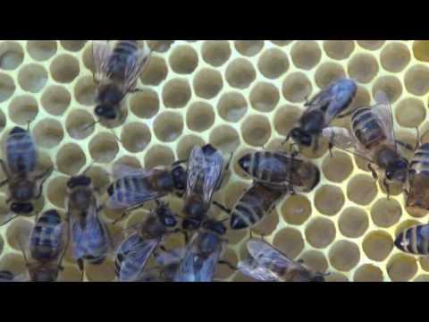 Пчеловодство выходного дня
