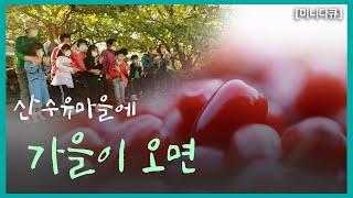 [미니多Q] 산수유마을에 가을이 오면 | KBS 201…