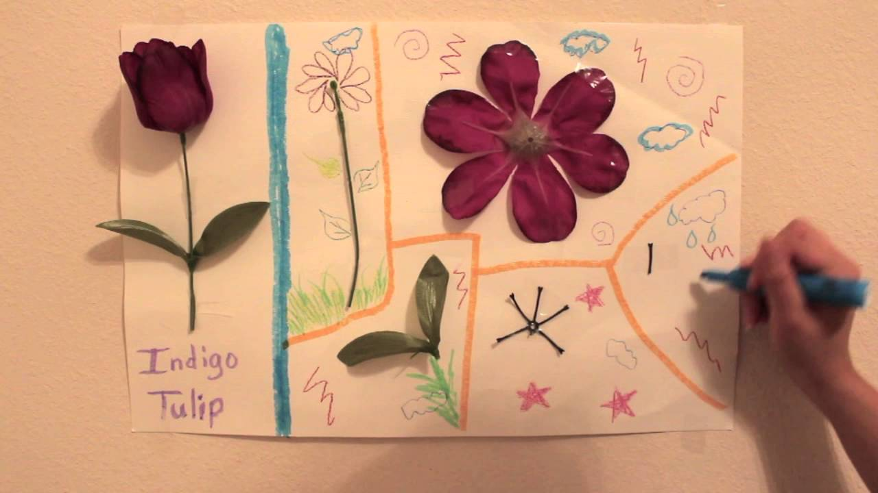 Parts Of A Flower For Kids Youtube