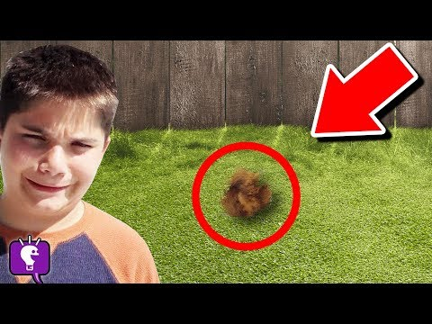 we-find-mystery-animal-in-our-backyard-(hobbypig-is-missing!)