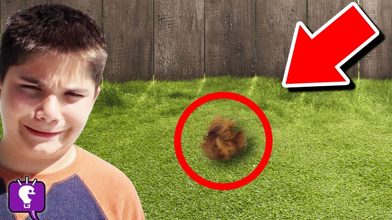 We Find Mystery Animal in Our Backyard (HobbyPig is missing!)