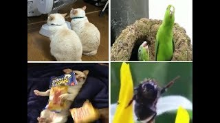 Animal Vine Compilation
