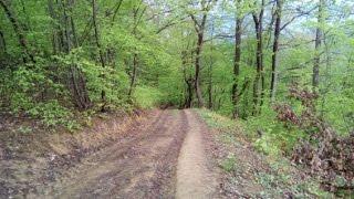 Šumske ljekovite biljke,4. dio