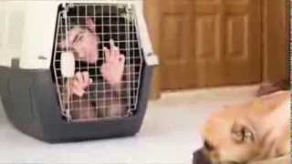 Dog Obedience Training - Training Secret Of Well Behaved Dog