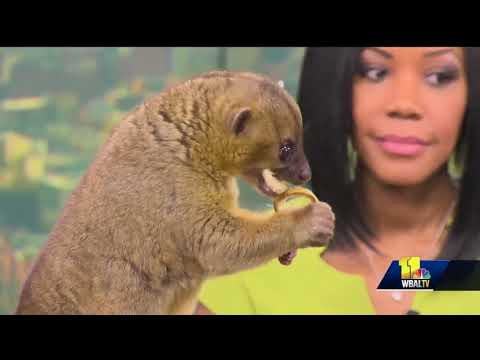 Meet this unique creature at the Maryland Zoo in Baltimore