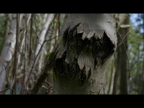 A Beautiful Forest - Film