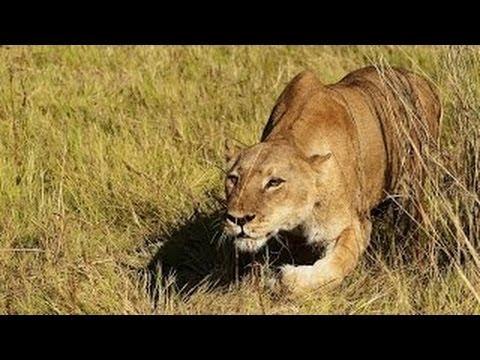 Africa's Super Predators Special  (Full Documentary)